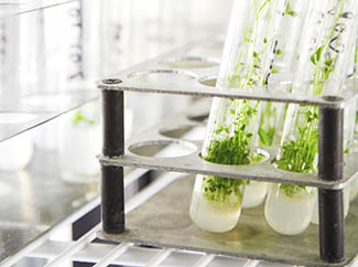 Propagation : Grow your cells and seedlings